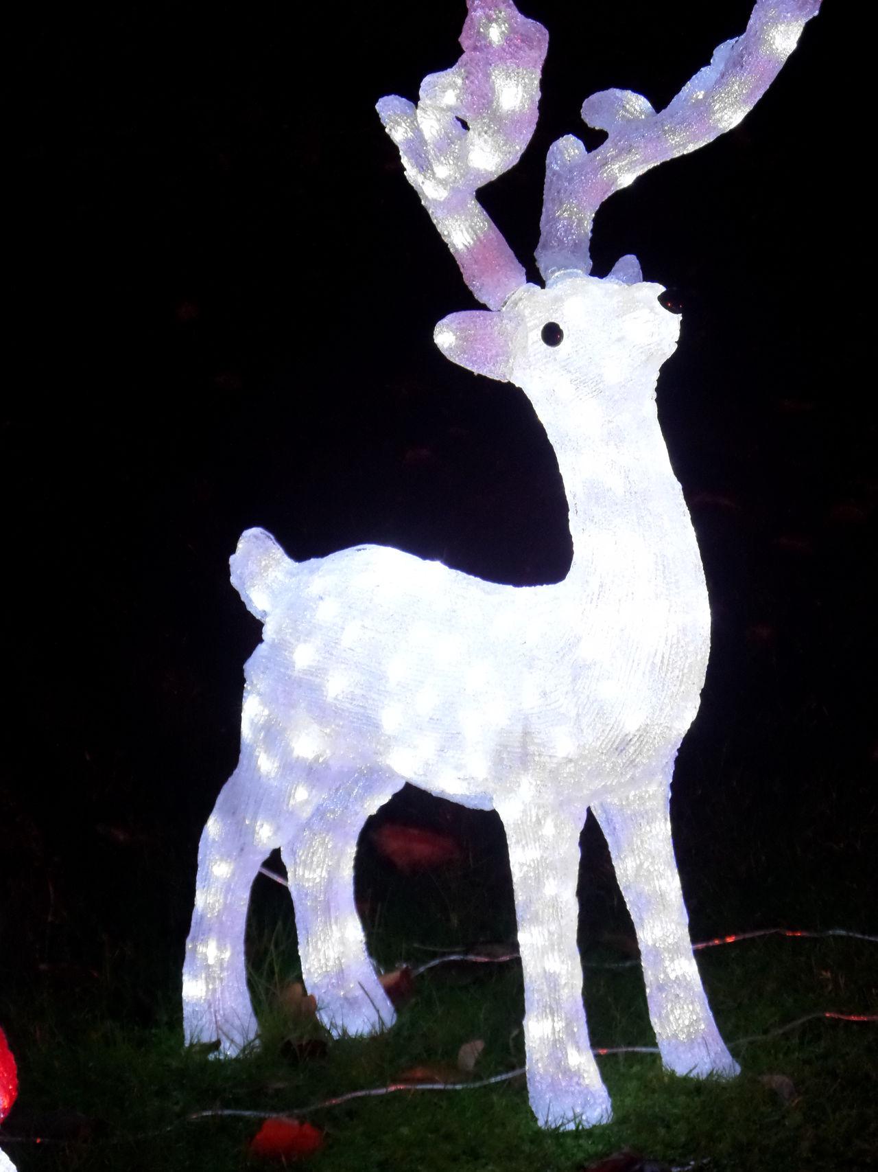Celebration. Christmas Lights. Not Long Now Chrisytmas Decoration Copy Space. Holidays Lit Up Rheindeer. No People. Beauty In Nature Diamond Pattern One Rheindeer, Rheindeer. Thankgiving.