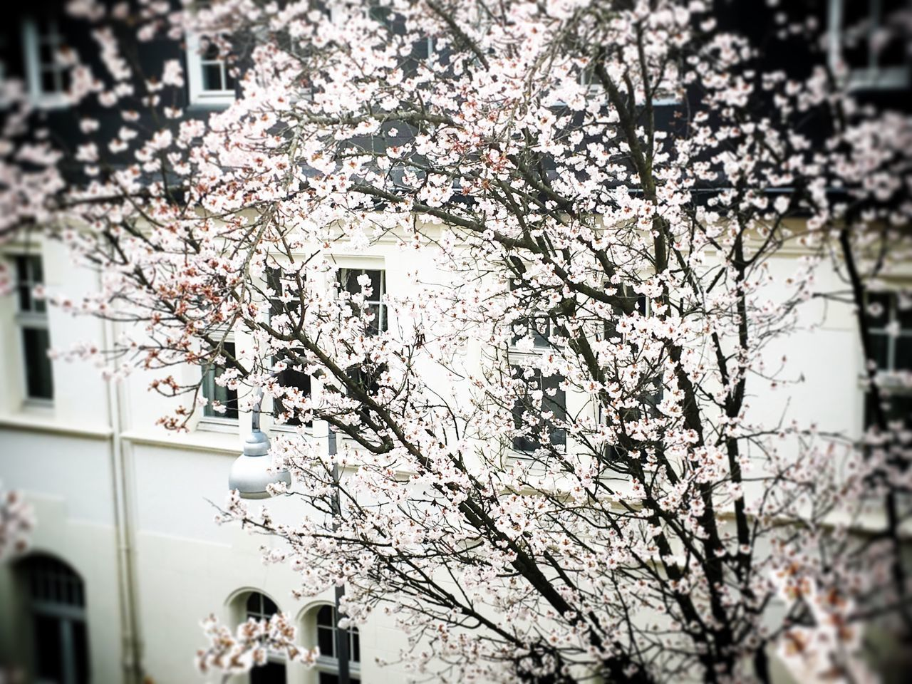 Spring flowers Tree Architecture Building Exterior No People Flower Springtime Growth Outdoors Nature Europe Germany Blossom Blossom Tree