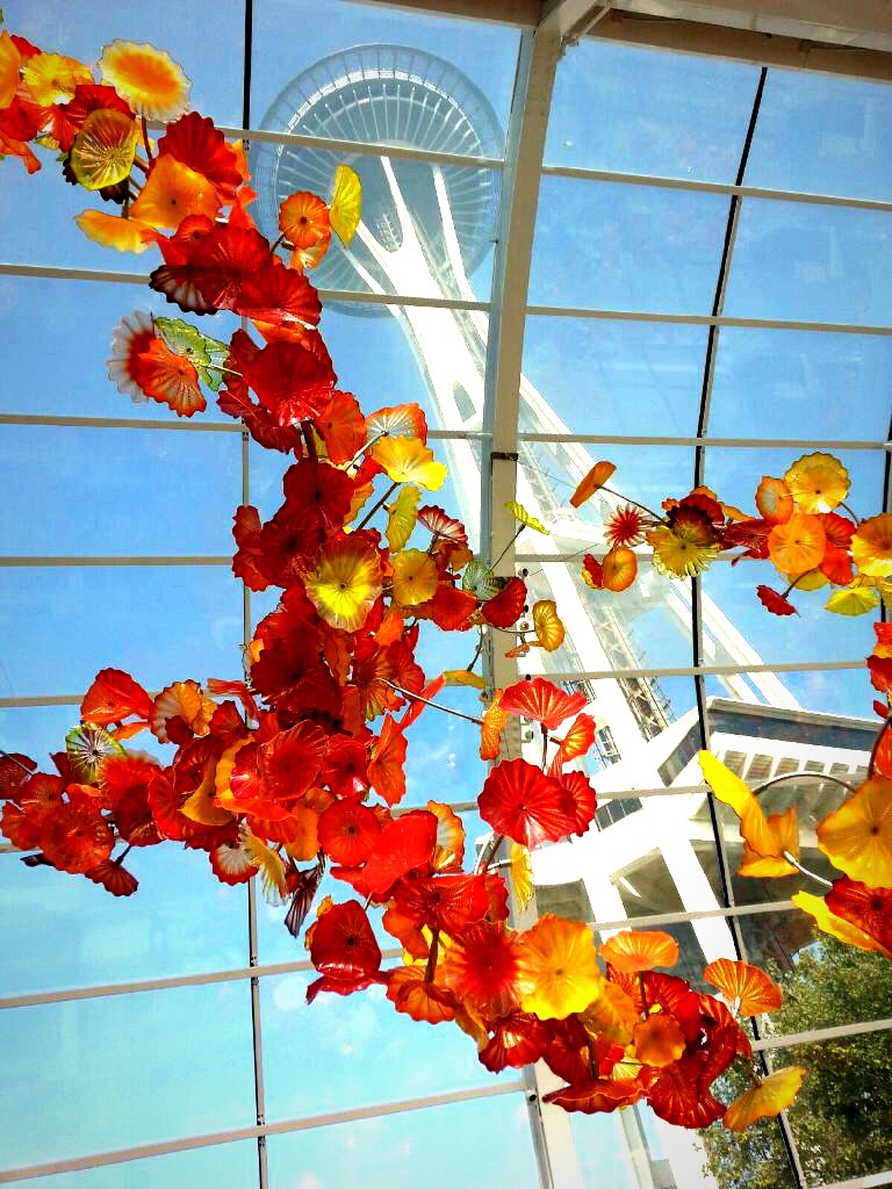 flower, red, low angle view, freshness, growth, plant, indoors, fragility, day, built structure, nature, blue, no people, wall - building feature, beauty in nature, orange color, close-up, architecture, hanging
