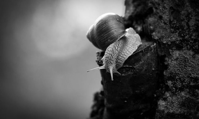 Animal Themes Animals In The Wild Close-up Wildlife Snail Zoology Nature Beauty In Nature Canon 5d Mark ıı Canon EF 100-400 L IS USM
