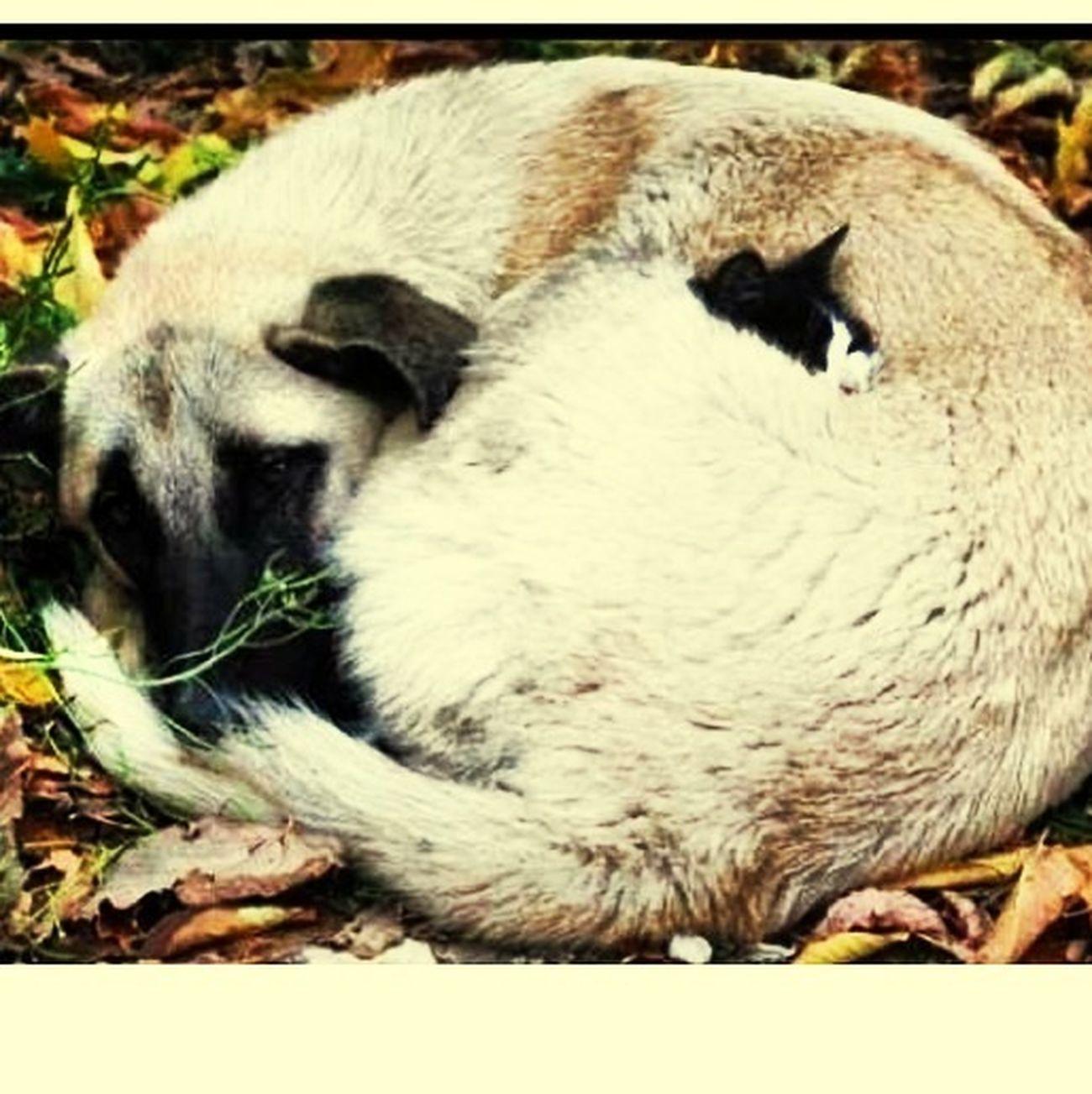 In Diesem Bild Ist Eine Katze Versteckt Findest Du Sie