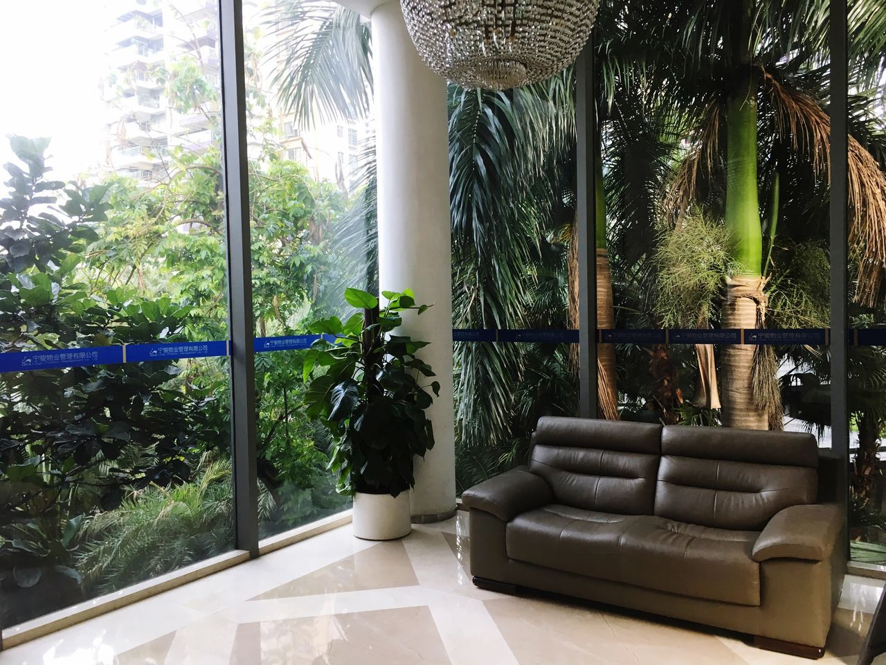 Home Interior Luxury Palm Tree Tree Armchair Indoors  Sunlight Day Living Room Elégance Window No People Plant Luxury Hotel Growth Home Showcase Interior Modern Nature Architecture