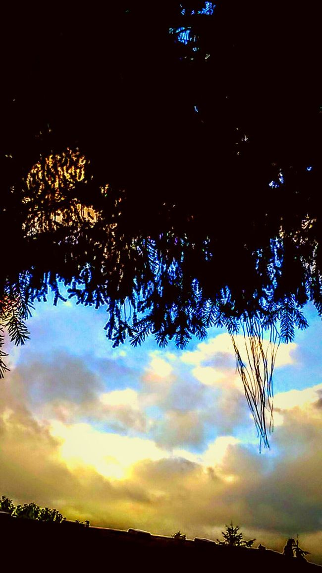 Lookingup Sky_collection Sky Through The Trees  Rooftop WeatherPro: Your Perfect Weather Shot Stormy Weather Oregonexplored Sunset_collection Everything In Its Place TeamBreezy Tree Branches Pinetrees Backyardphotography Eyemphotography Getting Inspired Getty Images Loving Nature Heaven And Earth Taking Photos Timeflies Blue Sky Shades Of Sky