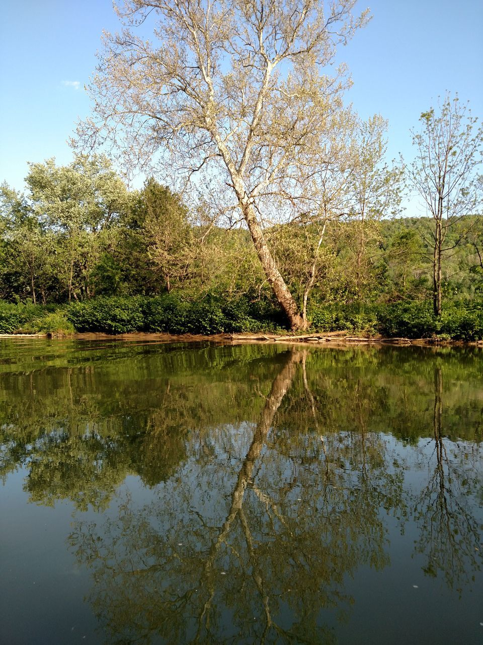 reflection, tree, lake, water, nature, tranquility, tranquil scene, beauty in nature, day, outdoors, no people, waterfront, scenics, sky, branch