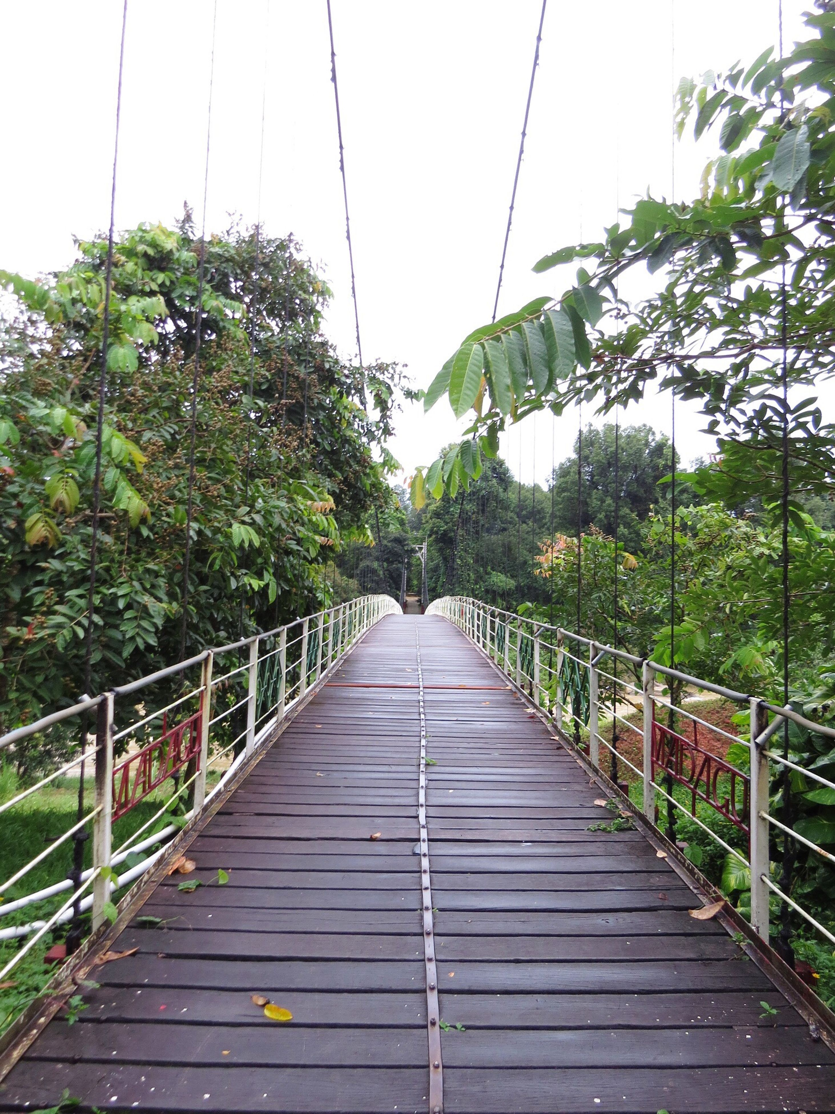 tree, railing, the way forward, clear sky, growth, connection, green, tranquil scene, long, plant, footbridge, day, scenics, tranquility, diminishing perspective, nature, narrow, outdoors, solitude, bridge, sky, green color, non-urban scene, no people, beauty in nature