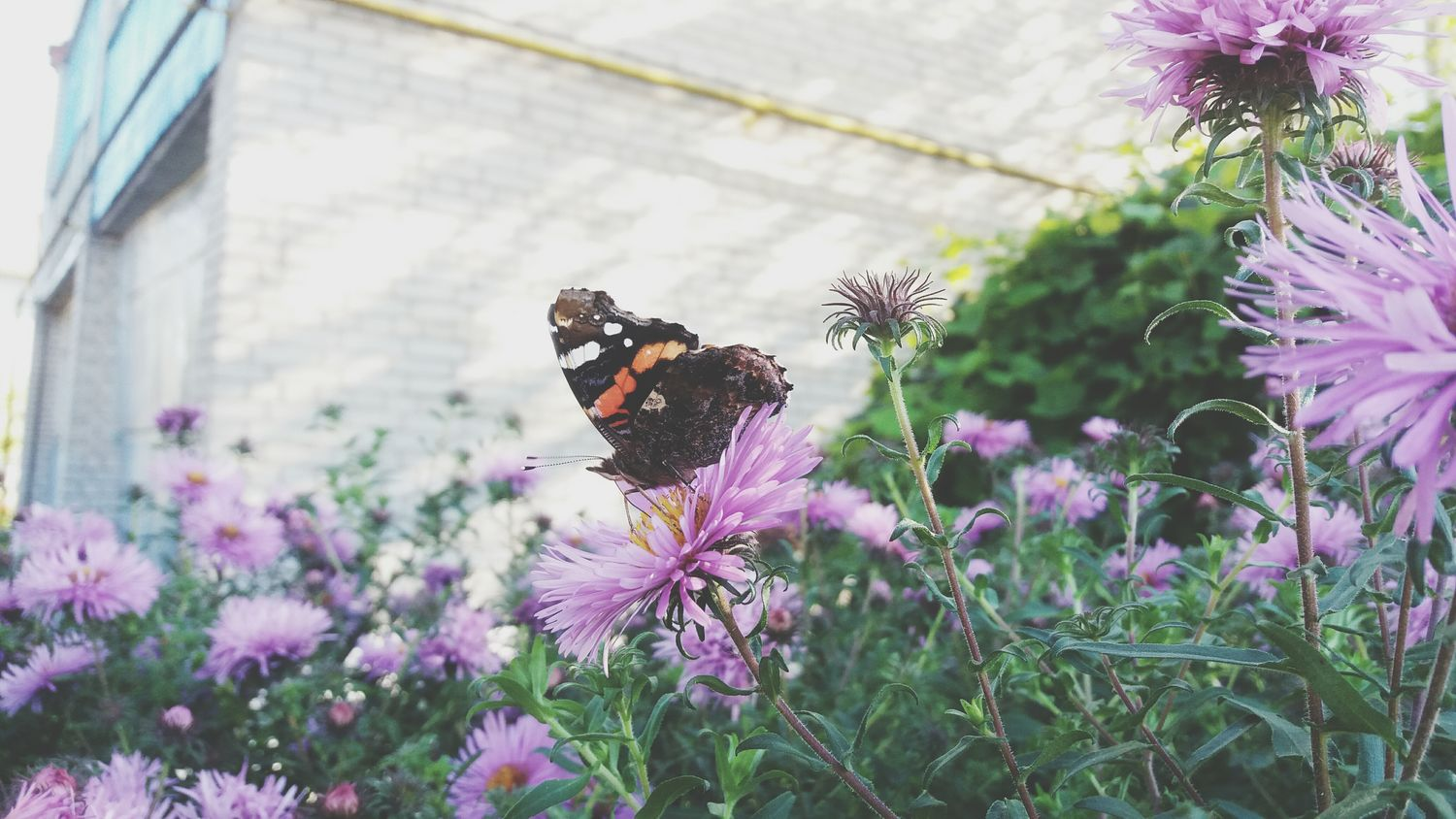 Sweet Buterflyflowers Flowers Love Doing Photos Love Love Love <3 Picturesque LIKE THIS PHOTO Animal Colour Of Nature