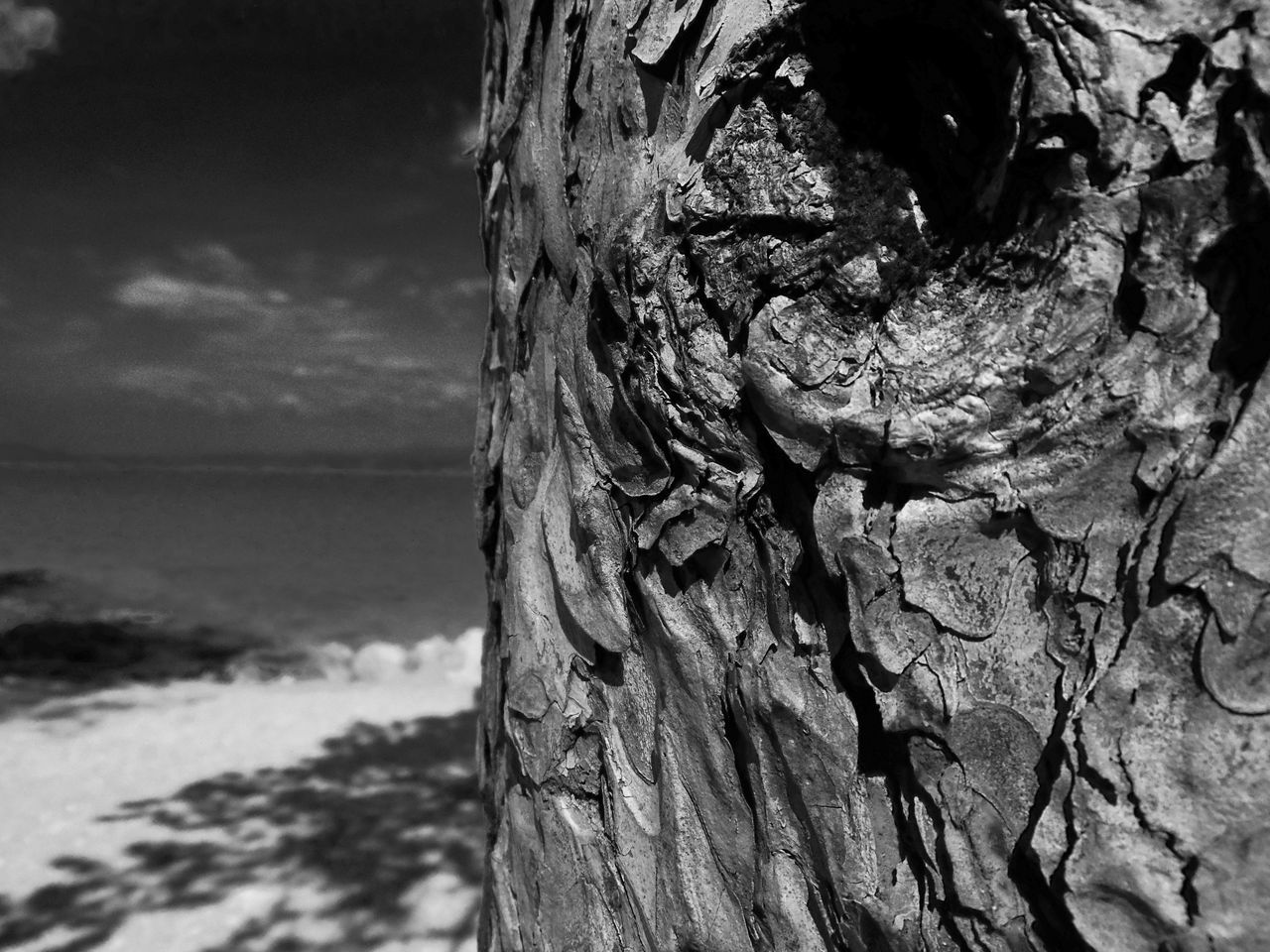 Bacground Beach Macro Sea And Sky Shadoes Surfaces And Textures Wood - Material Wood Surface