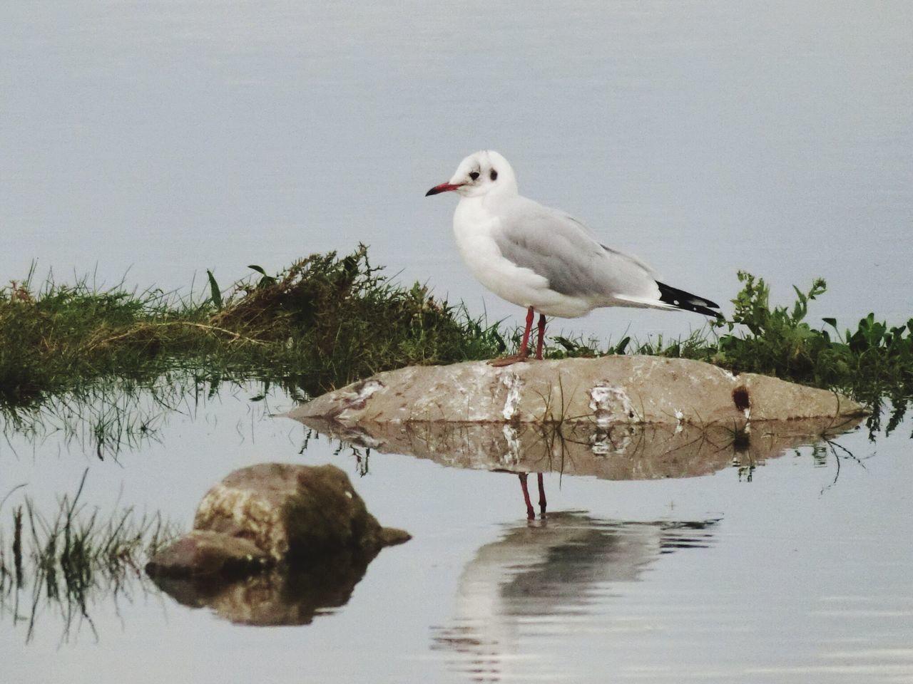 Animal Themes Bird Animals In The Wild Animal Wildlife Water Nature Beauty In Nature