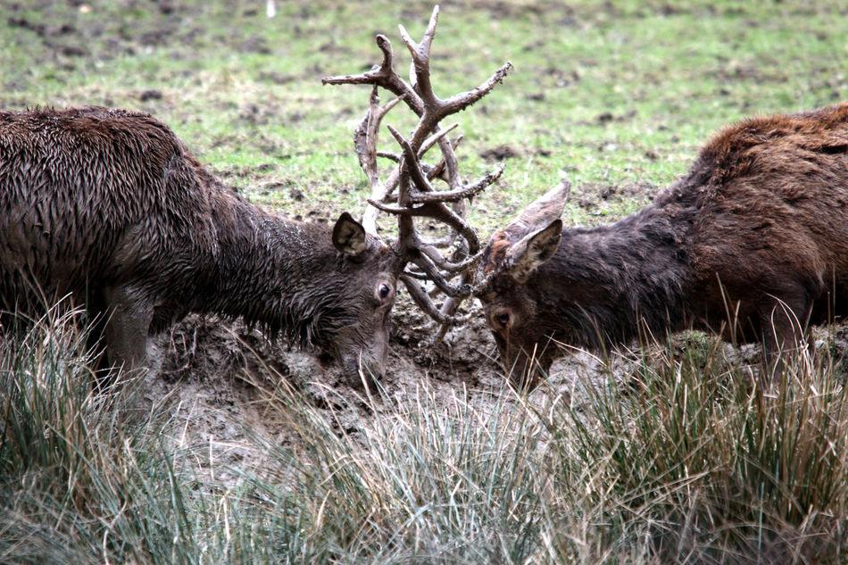 Animal Head  Animal Wildlife Animals In The Wild Antler Deer Deerhead Nature Photography Wildlife Wildlifephotography