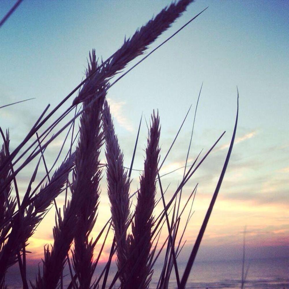 Keşke bir şiir okumuş,bir kedi sevmiş olsaydınız…Belki bu kadar, kirletmezdiniz dünyayı… || Turgut Uyar Nature Scheveningen  Kijkduin No People Beach Holland Uzaklar Umut EyeEmNewHere