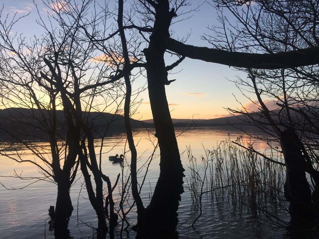 Bare Tree Tree Reflection Twoducks Waterfront Nature On Your Doorstep Outdoor Photography Sunset Calm Waterscape Outdoor Life Lovelyview VisitScotland Naturelovers Nature Beauty In Nature LochLomond