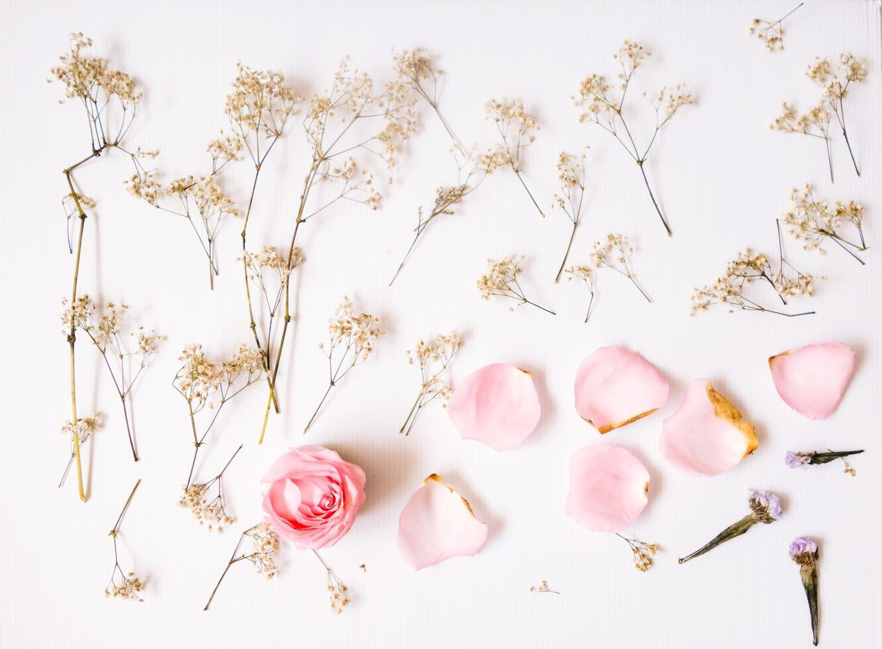 Beautiful stock photos of roses, Beauty In Nature, Bloom, Close-Up, Flower