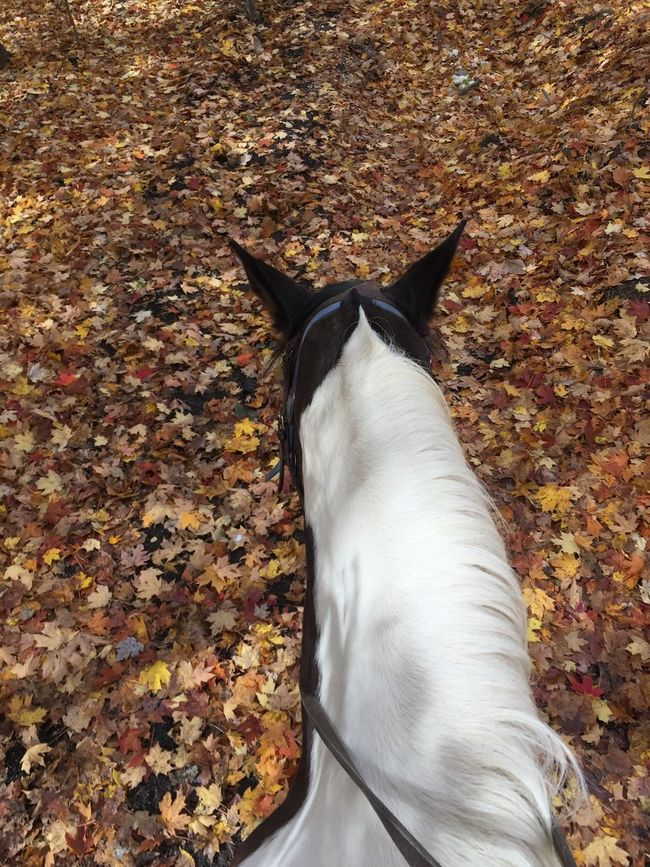 Animal Themes Autumn Beauty In Nature Change Close-up Day Horse Horse Back Riding Leaf Mammal Nature No People One Animal Outdoors TCPM Woods
