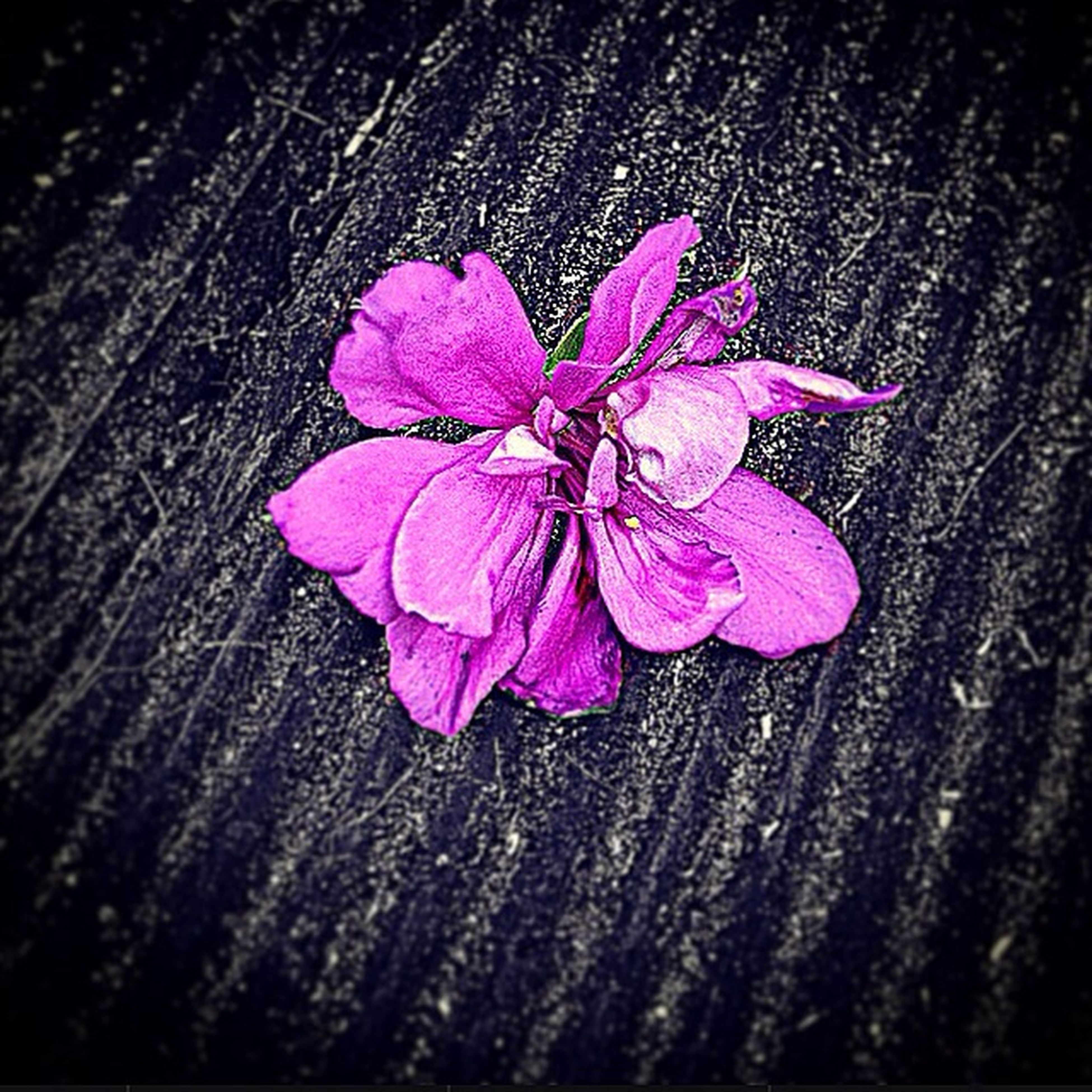 flower, fragility, petal, close-up, high angle view, pink color, flower head, nature, freshness, single flower, beauty in nature, directly above, no people, outdoors, natural pattern, growth, textured, botany, day, pink