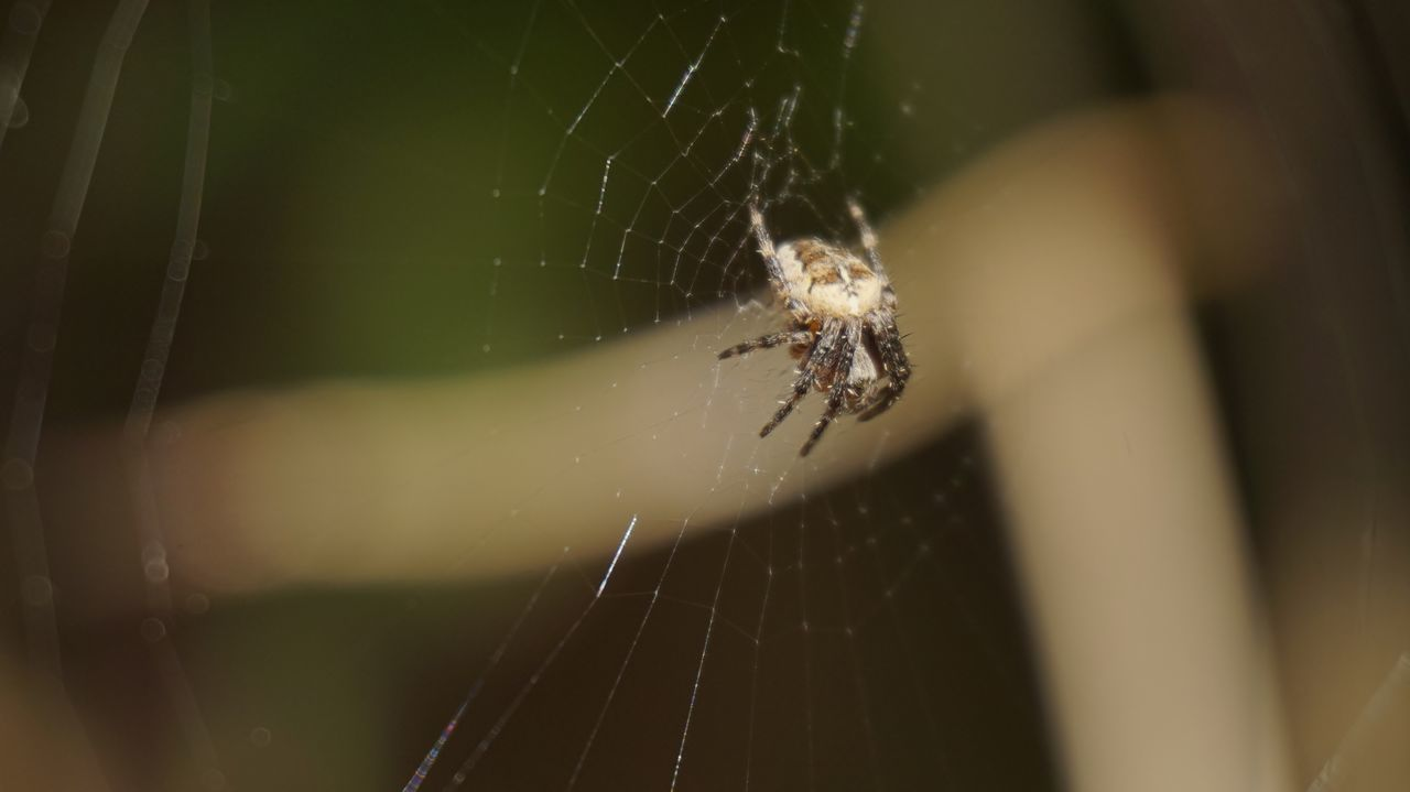 2982 Animal Leg Animal Themes Animal Wildlife Animals In The Wild Background Defocus Blurred Blurred Background Close-up Day Daylight Daytime Focus On Foreground Fragility Insect Nature No People One Animal Outdoors Spider Spider Web Spidersweb Survival Weaving Web
