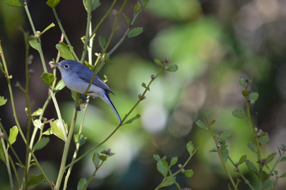 Vogel Bird Vogel