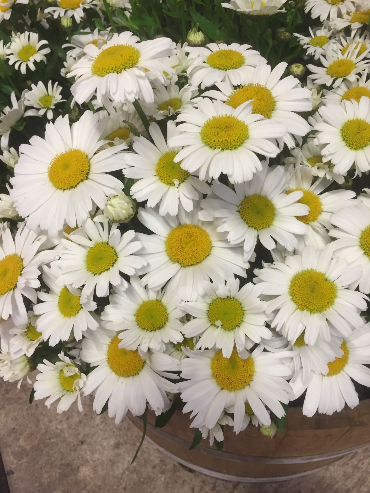 Daisies Flower Yellow Petal Fragility Freshness Flower Head Nature Beauty In Nature No People Day Outdoors Plant Blooming Close-up Daisy Flower Arrangement