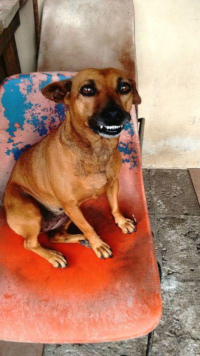 Cacau Dogs OnAOrdinaryMorning Cellphonephotography Motog2