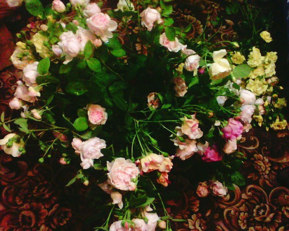 Flower Beauty In Nature Beauty In Nature Ukraine Iokov Kherson Night троянда ружа квіти файно емоції Emotion Goodnight