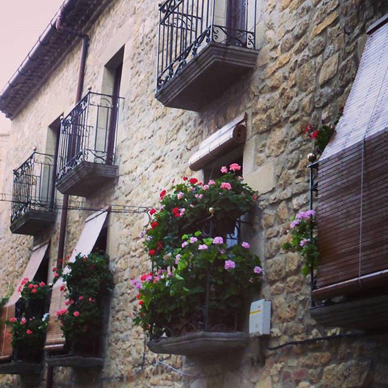 Paseando. Sosdelreycatolico Igerszgz Civitur Igersaragon YovisitoCincoVillas Aragón turismo travel flowers