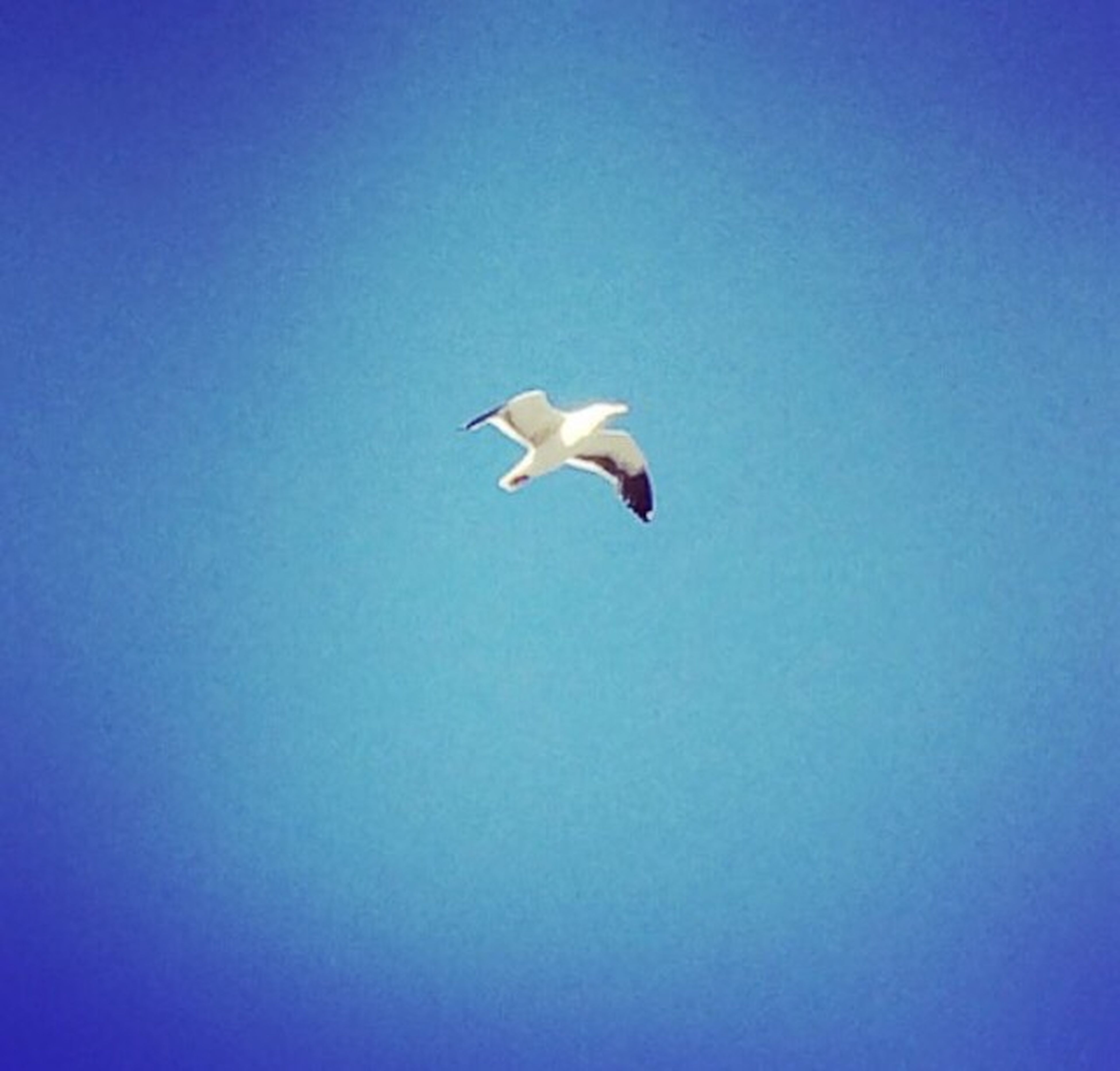 flying, bird, animal themes, spread wings, animals in the wild, wildlife, mid-air, one animal, blue, low angle view, clear sky, copy space, seagull, nature, freedom, motion, full length, no people, zoology, on the move