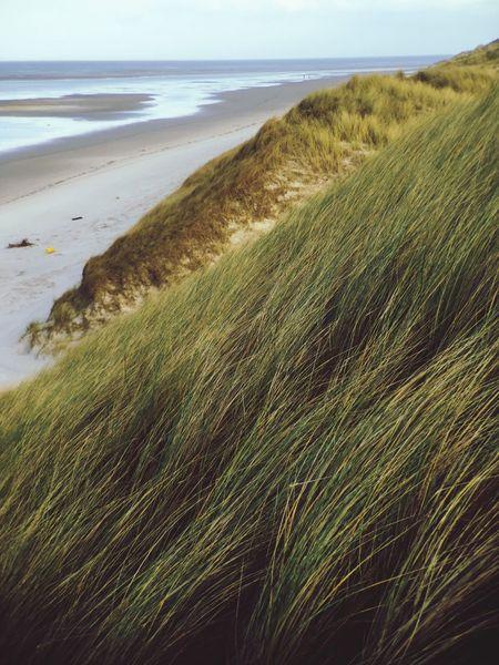 Nature Dunes Seaside Beach Grass Winter Amrum
