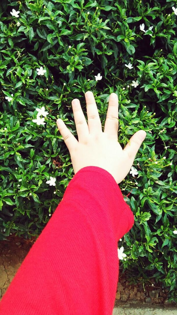 human hand, human body part, real people, plant, personal perspective, one person, day, leaf, outdoors, red, growth, nature, close-up, tree, low section, people