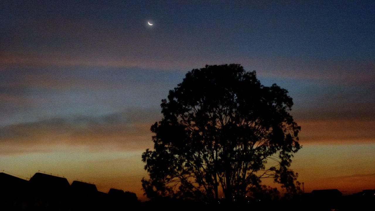 Tree Sky Star - Space Astronomy Silhouette Space And Astronomy Space Night Nature No People Moon Beauty In Nature Constellation Outdoors EyeEm Nature Lover EyeEm Best Shots