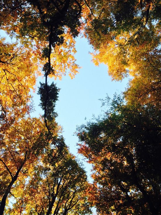 Autumn Beauty In Nature Branch Colorful Forest Forest Photography Growth Low Angle View Nature No People Non-urban Scene Orange Color Scenics Sky Tall - High Tree Tree Canopy  Tree Lovers Tree Tops And The Sky