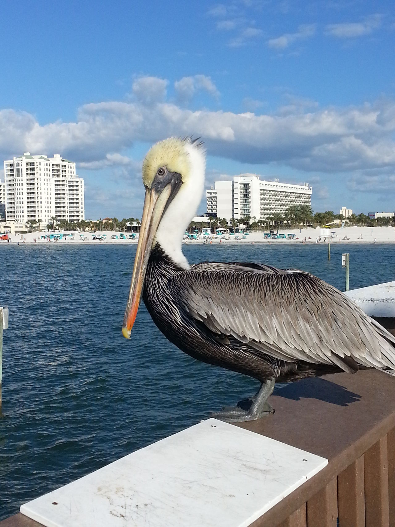 Animal Themes Animals In The Wild Architecture Bird Building Exterior City Day Florida Nature No People One Animal Outdoors Pelican Sculpture Sea Sky Tampa Travel Water