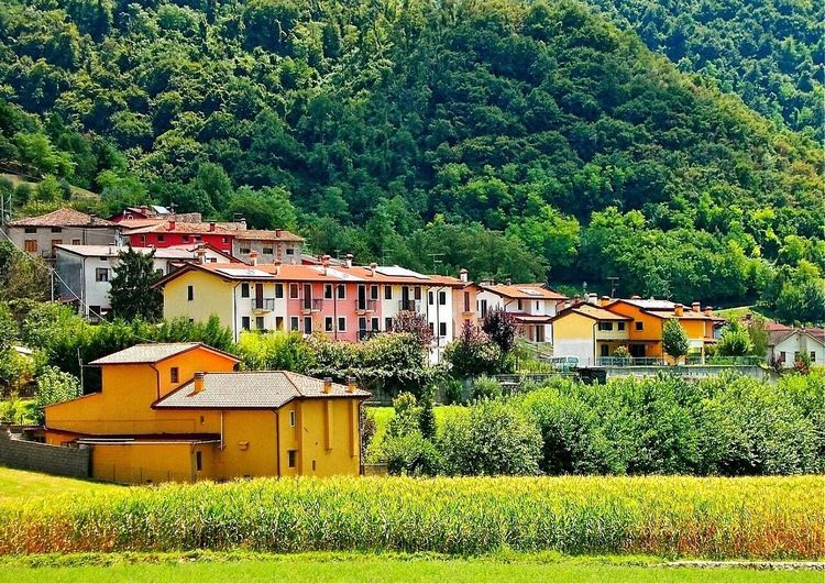 My land. Small village (Contrada) 😎👋🐨 Myland  Architecture Built Structure Building Exterior Tree Green Color Nature Beauty In Nature Tranquil Scene Countryside Colors Photography EyeEm Gallery Emotion Landscape Landscape_Collection Landscapes Non-urban Scene Photo Summer Outdoors Field Hill Colorful