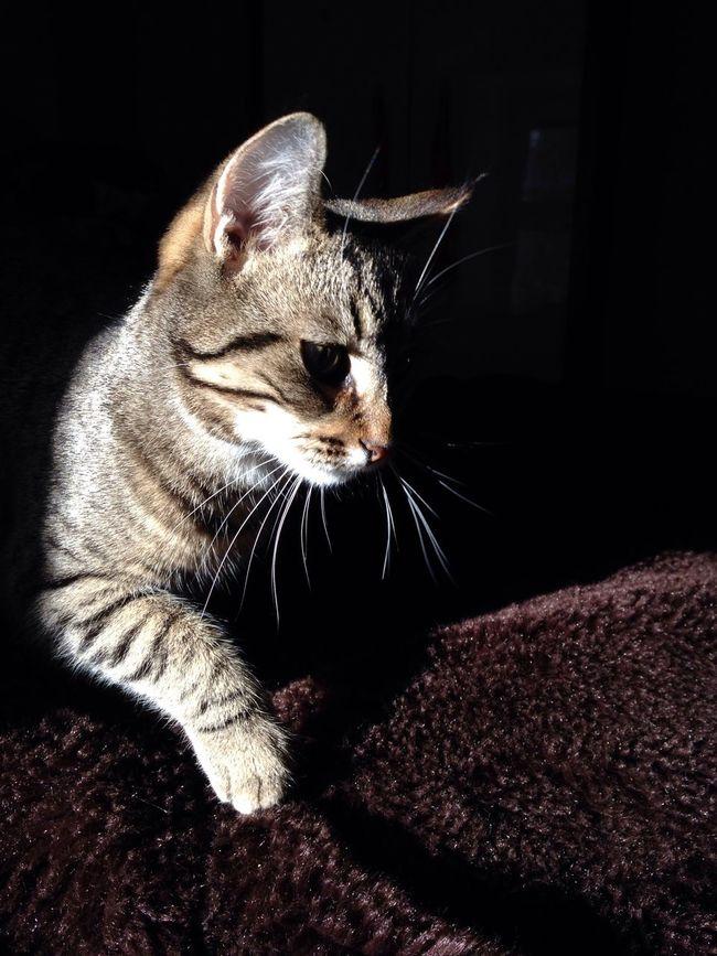Katniss Cat Kitten
