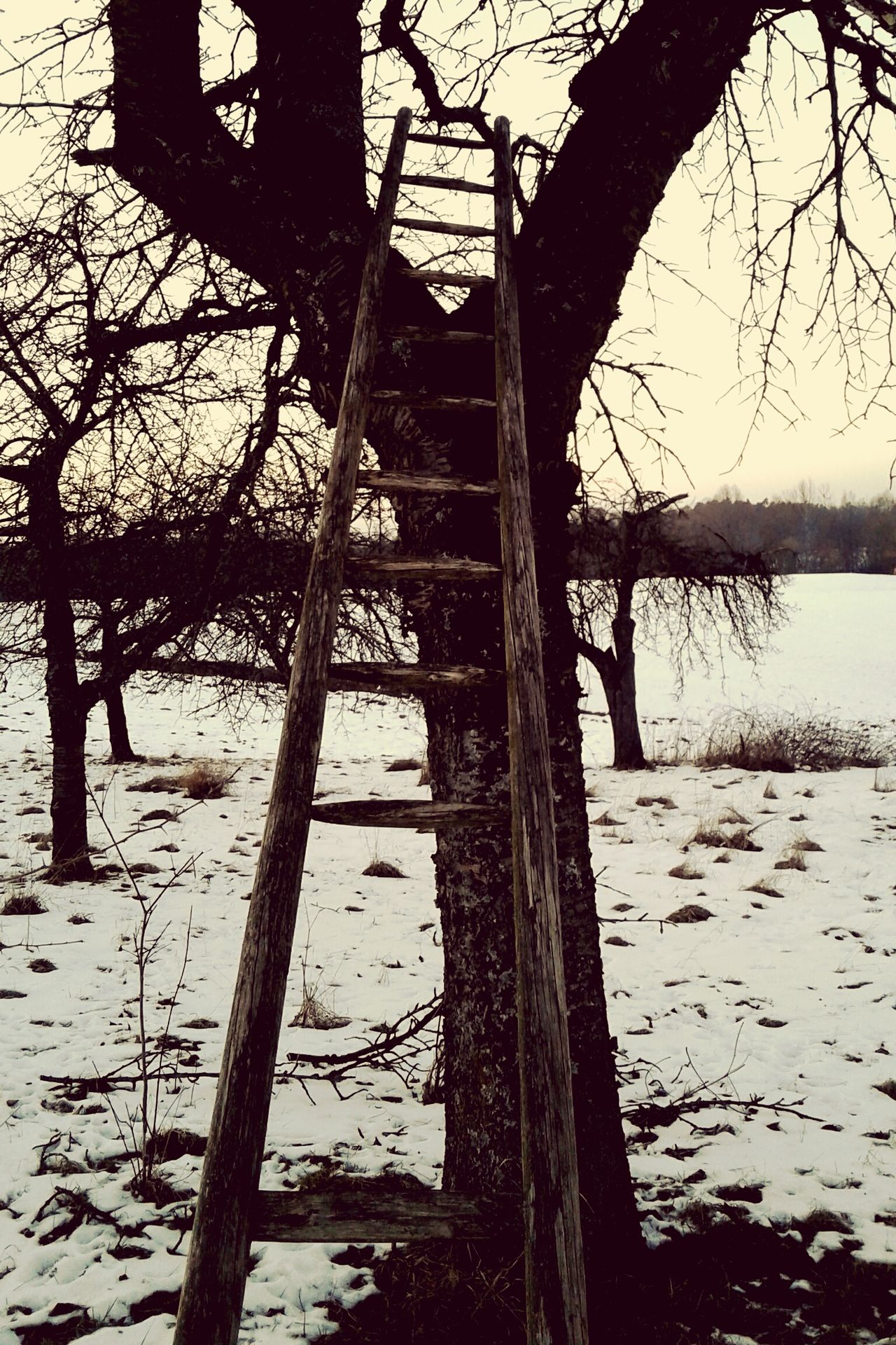 Nature Tree Outdoors Day Beauty In Nature Cloud - Sky Tranquility Tranquil Scene Winter Day Wintertime Sky Melancolia No People Ladder wooden ladder broken ladder Garden Photography Wood - Material