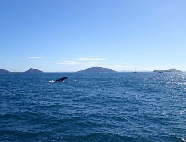 Whale breaching Check This Out Whale Watching Whale Taking Photos Ocean Nelson Bay