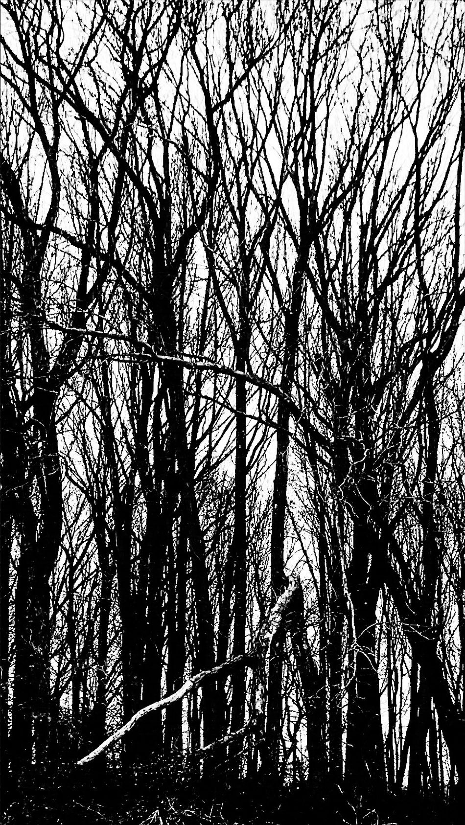 Forest in black and white Beauty In Nature Nature Tree Brokenbranches Trunks Tranquility Growth No People StillLifePhotography IPhone7Plus Camerafilters