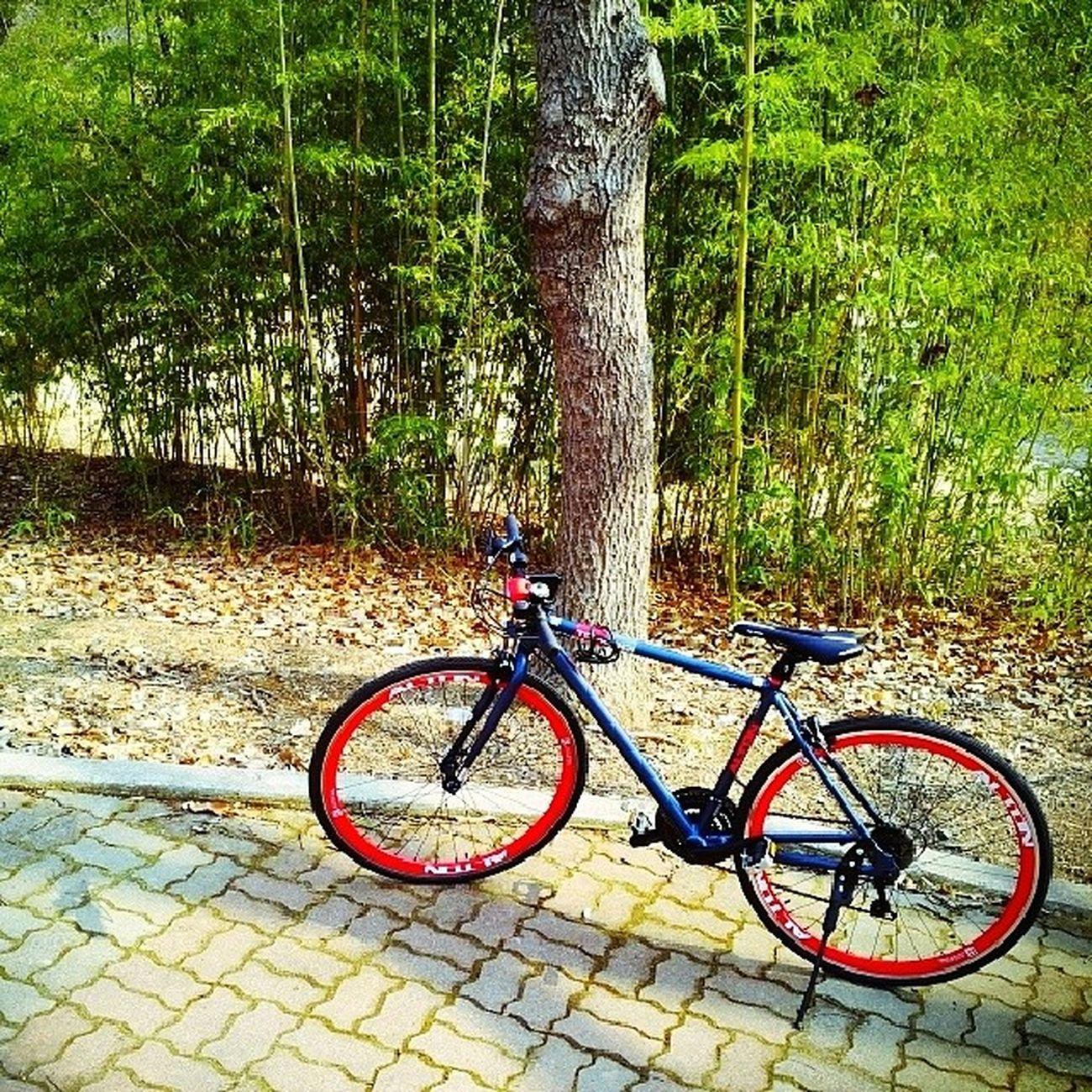 오후 자전거 산책