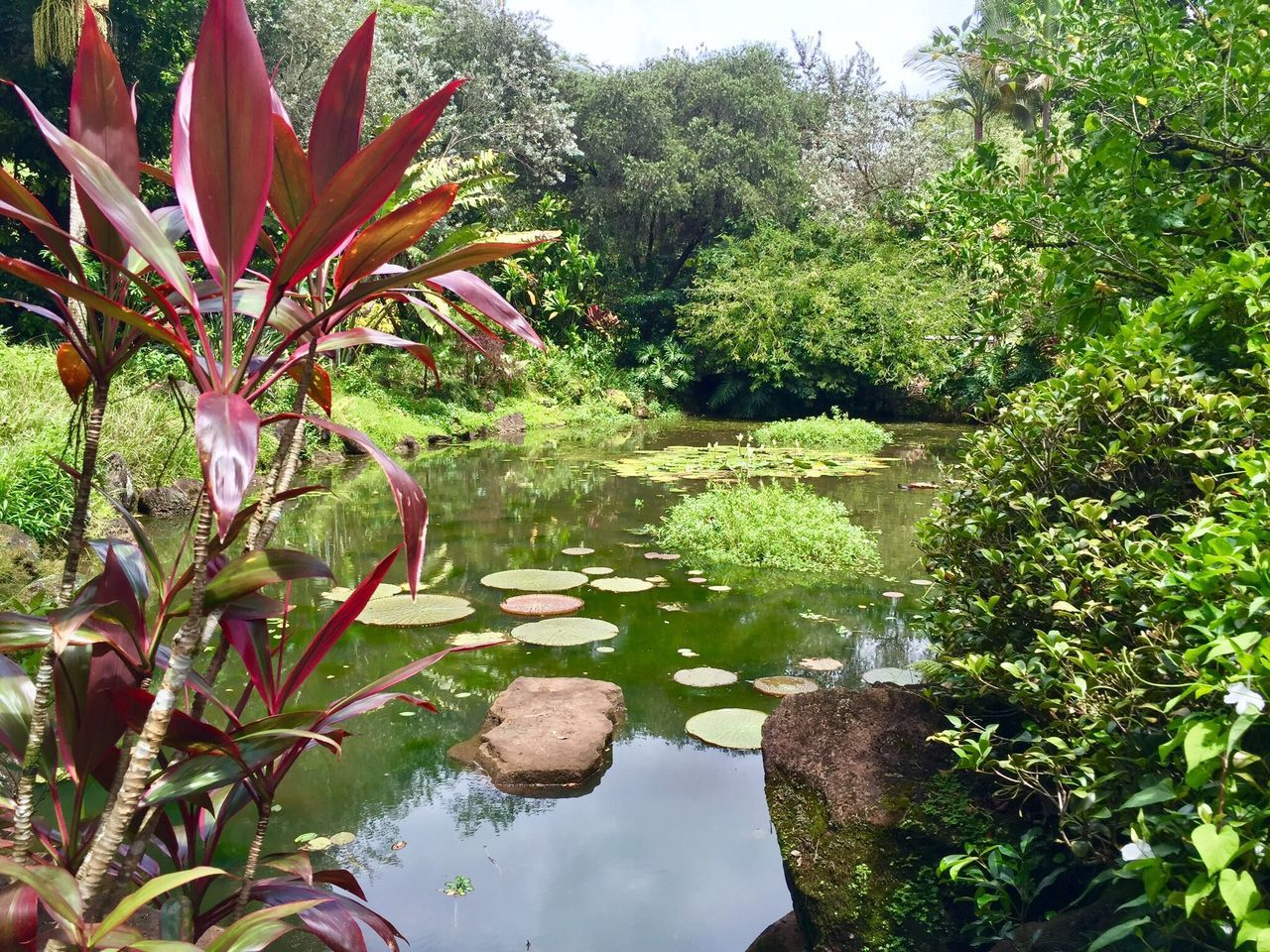 Oahu, Hawaii Nature Water Growth Plant Beauty In Nature Tree Outdoors No People Day Green Color Tranquility Tranquil Scene Scenics Sky