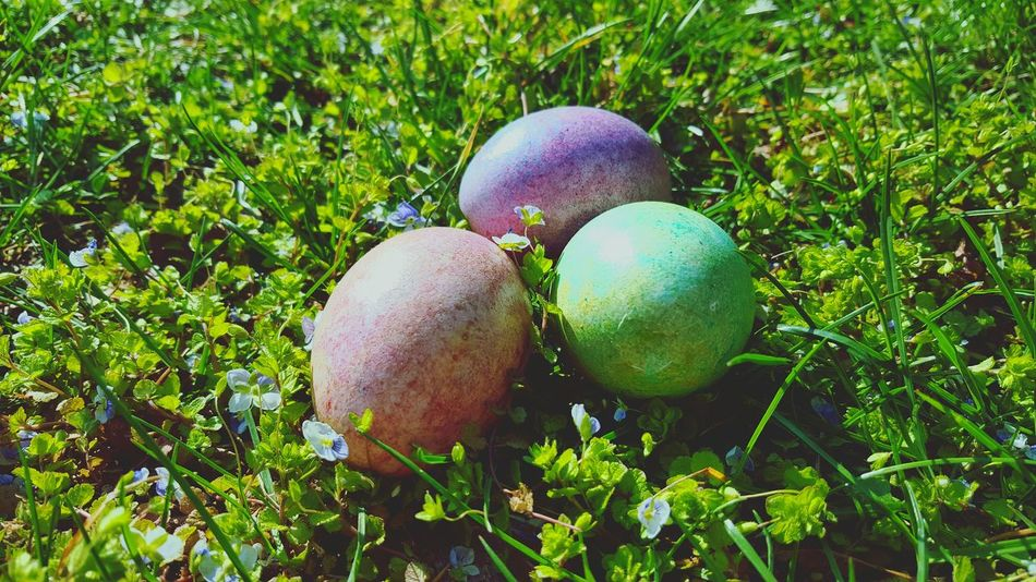 Grass Green Color Food Nature Close-up Growth Day Outdoors Beauty In Nature No People Ostereier Ostern Eier Farbe Food And Drink