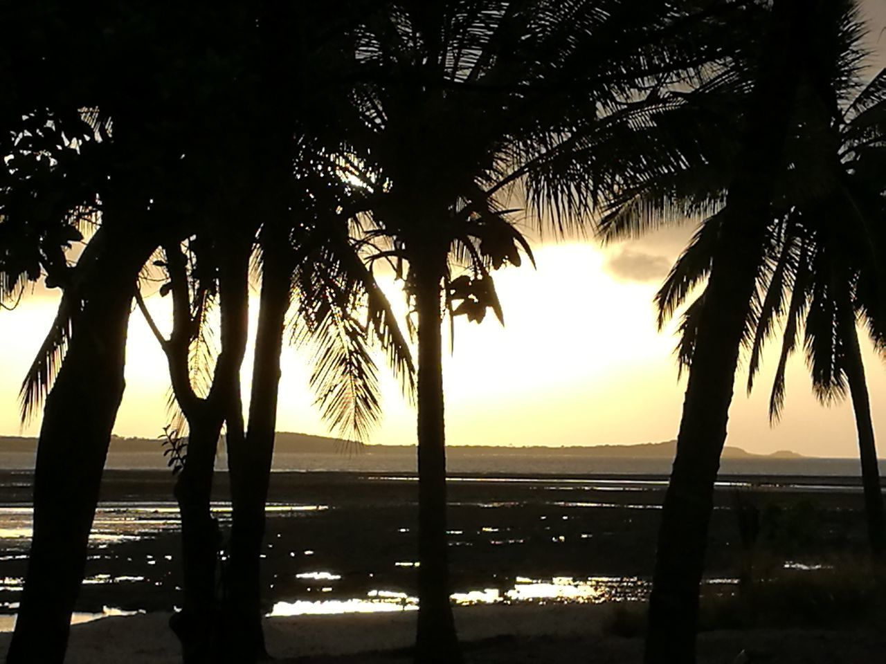 Sunset Sea Tree Nature Sunlight Sky Travel Water Vacations Sun Scenics Reflection Tourism Silhouette Outdoors Landscape No People Beach Backgrounds Travel Destinations