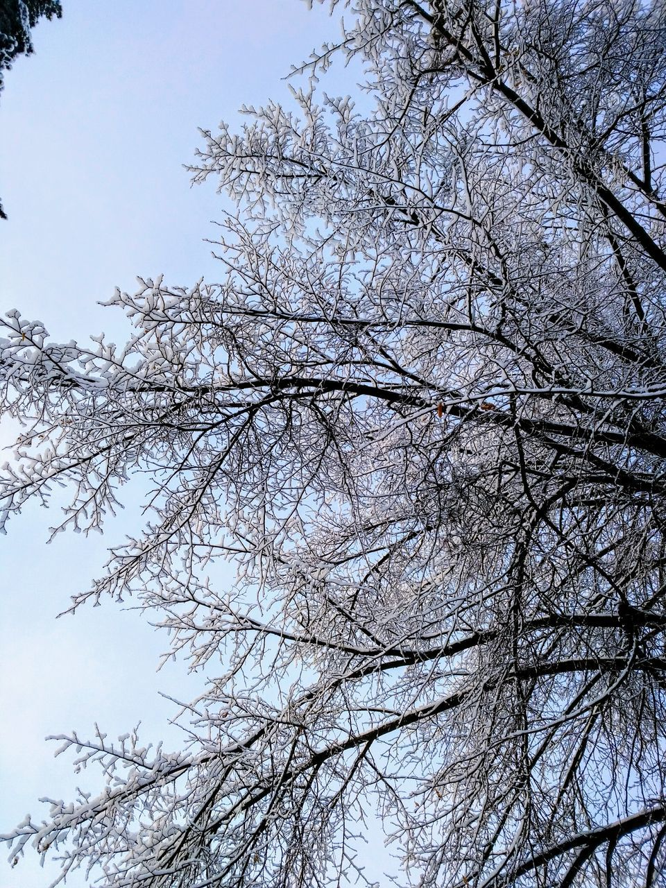 tree, branch, nature, beauty in nature, low angle view, growth, no people, flower, outdoors, day, tranquility, bare tree, sky, springtime, clear sky, winter, scenics, fragility, freshness