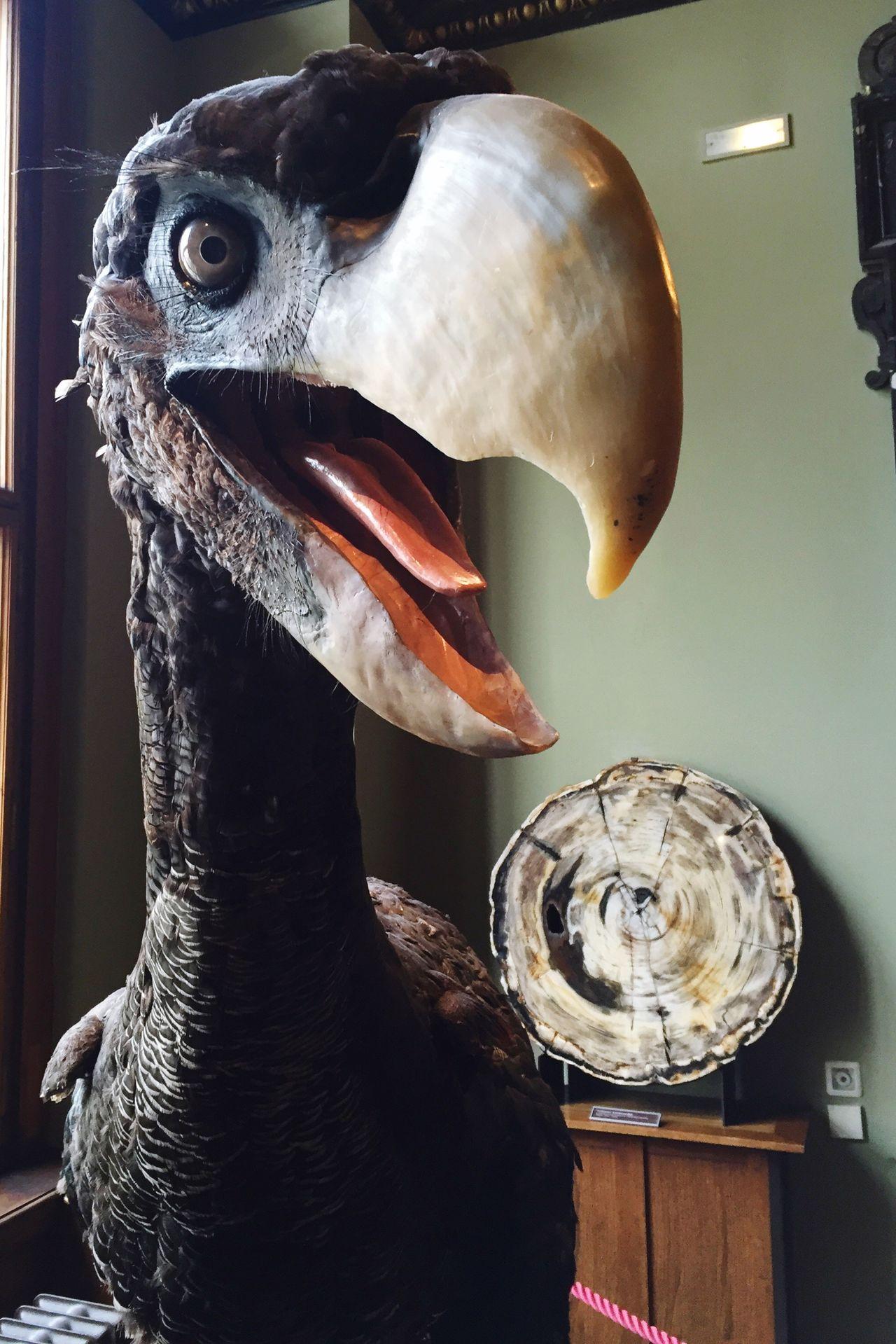 Terrorvogel Dinosaur Naturkundemuseum Wien