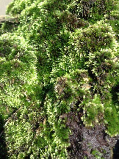 Color Palette Bryophyte Favorite Natural Pattern Selectivefocus Close Up Eyepleasing Eye Pleasing Soil Fresh how beautiful is it?? stunning!