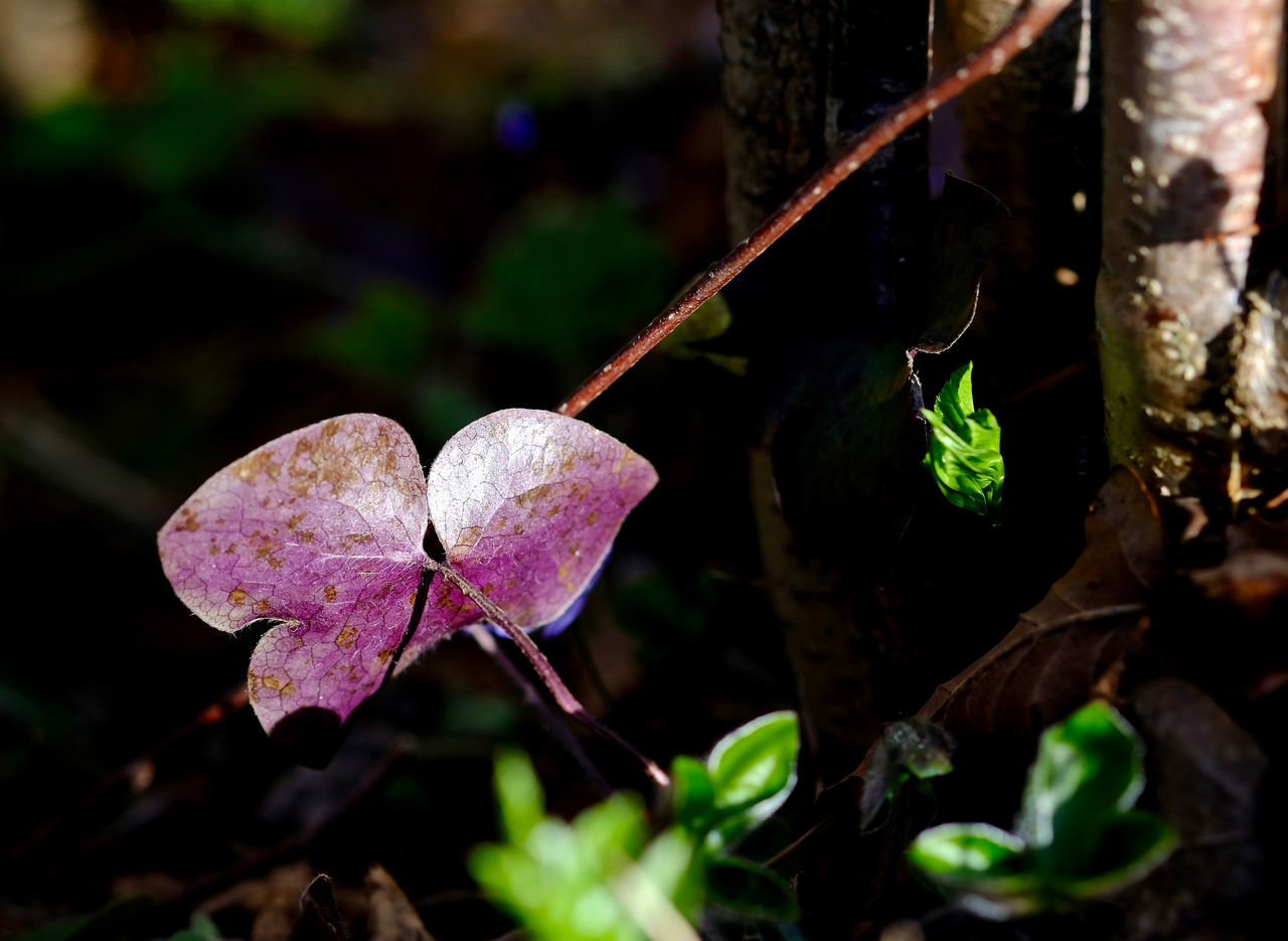 leaf, growth, nature, beauty in nature, day, outdoors, close-up, fragility, plant, focus on foreground, no people, freshness, water, flower, flower head