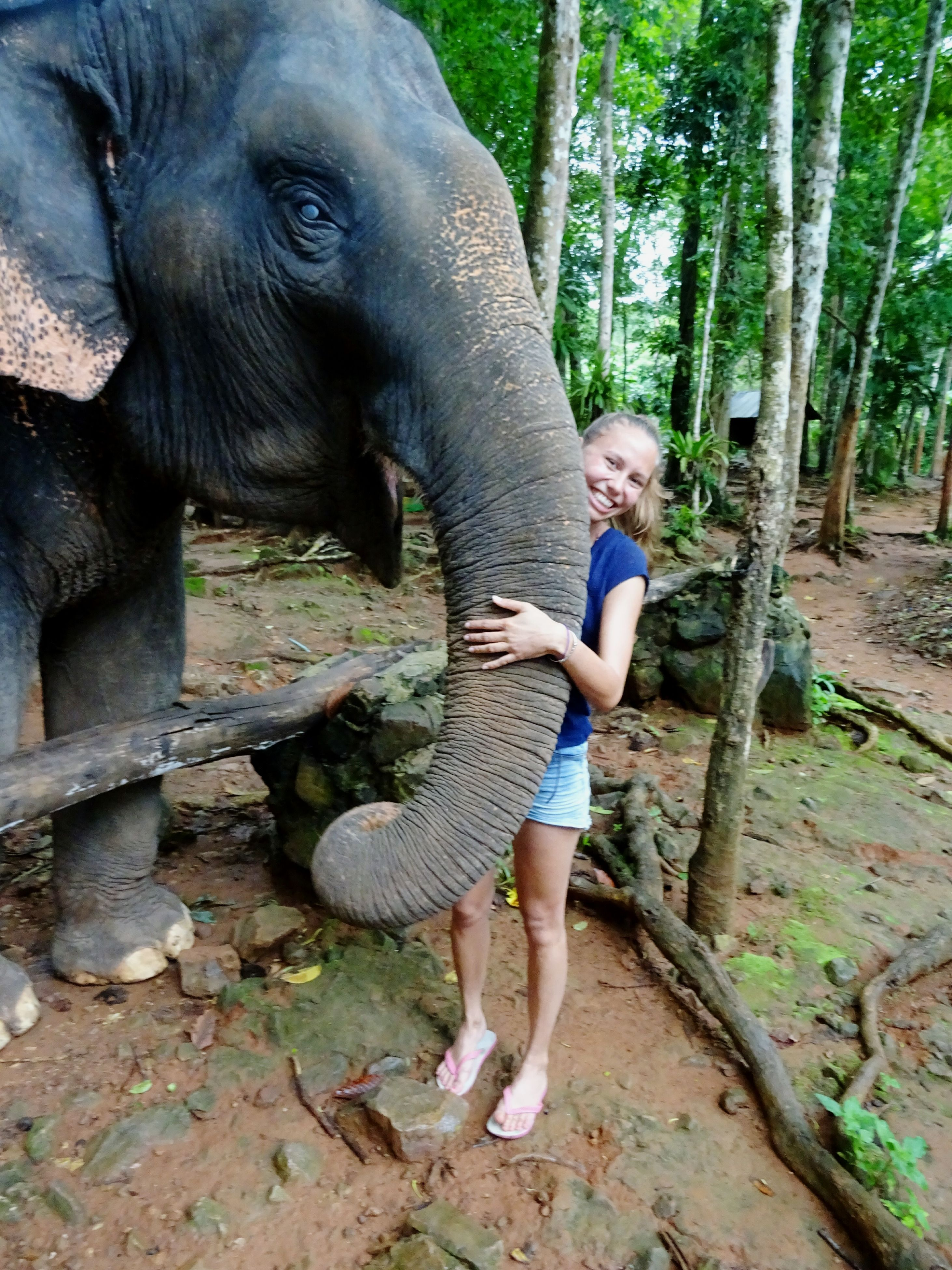 elephant, full length, child, indian elephant, animal, childhood, outdoors, day, people, one person, adult