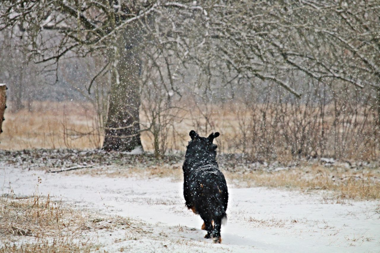 Animal Photography Black Capture The Moment Cold Cold Temperature Dog Domestic Animals Enjoying Life Field Fieldscape Joy Jumping My Dog Nature On Your Doorstep Nature Photography Nature_collection One Animal Pets Running Snow Snowing Tree Winter Winterscapes Wintertime