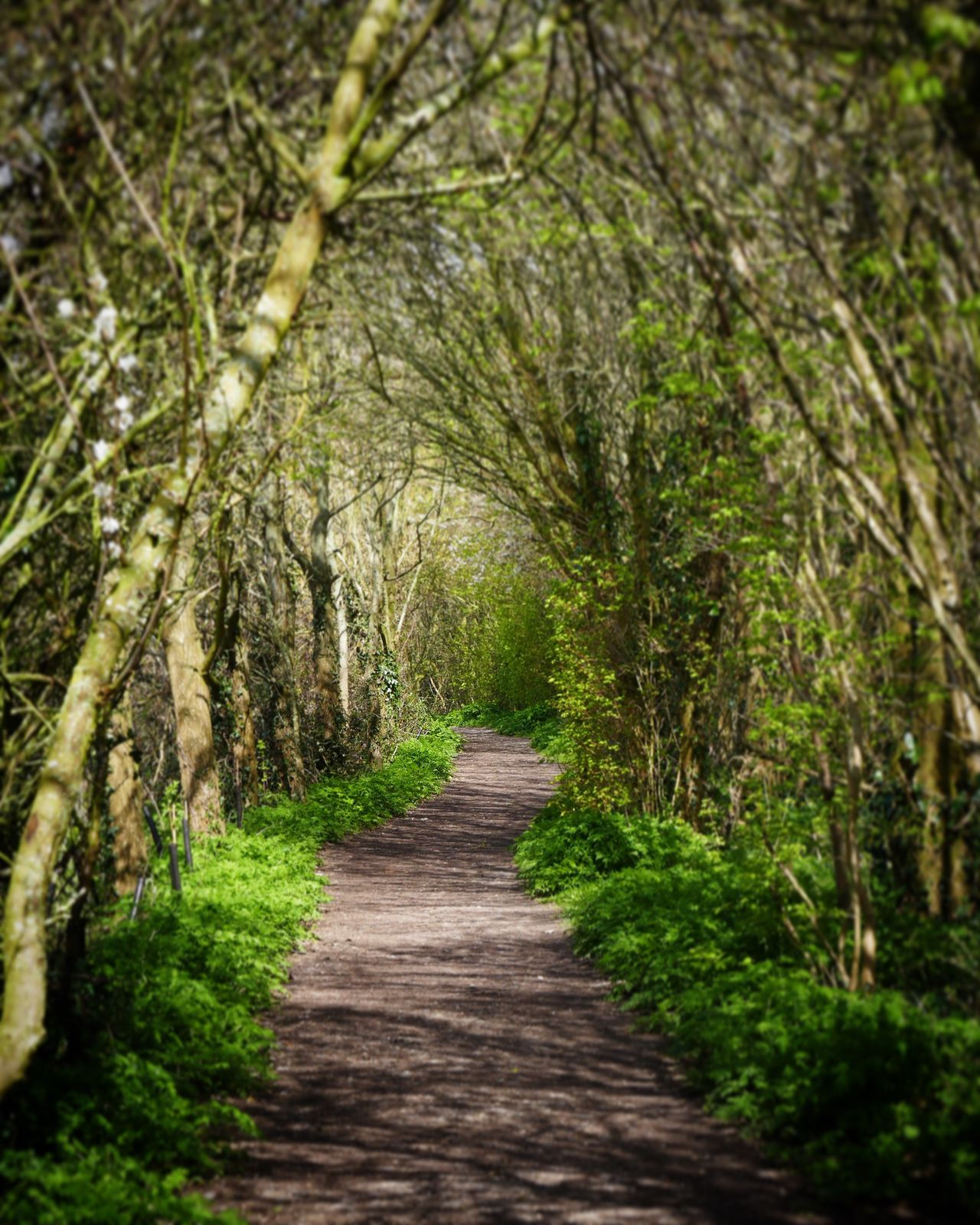 Path in the Woods Countryside Chichester Harbour Trees West Sussex