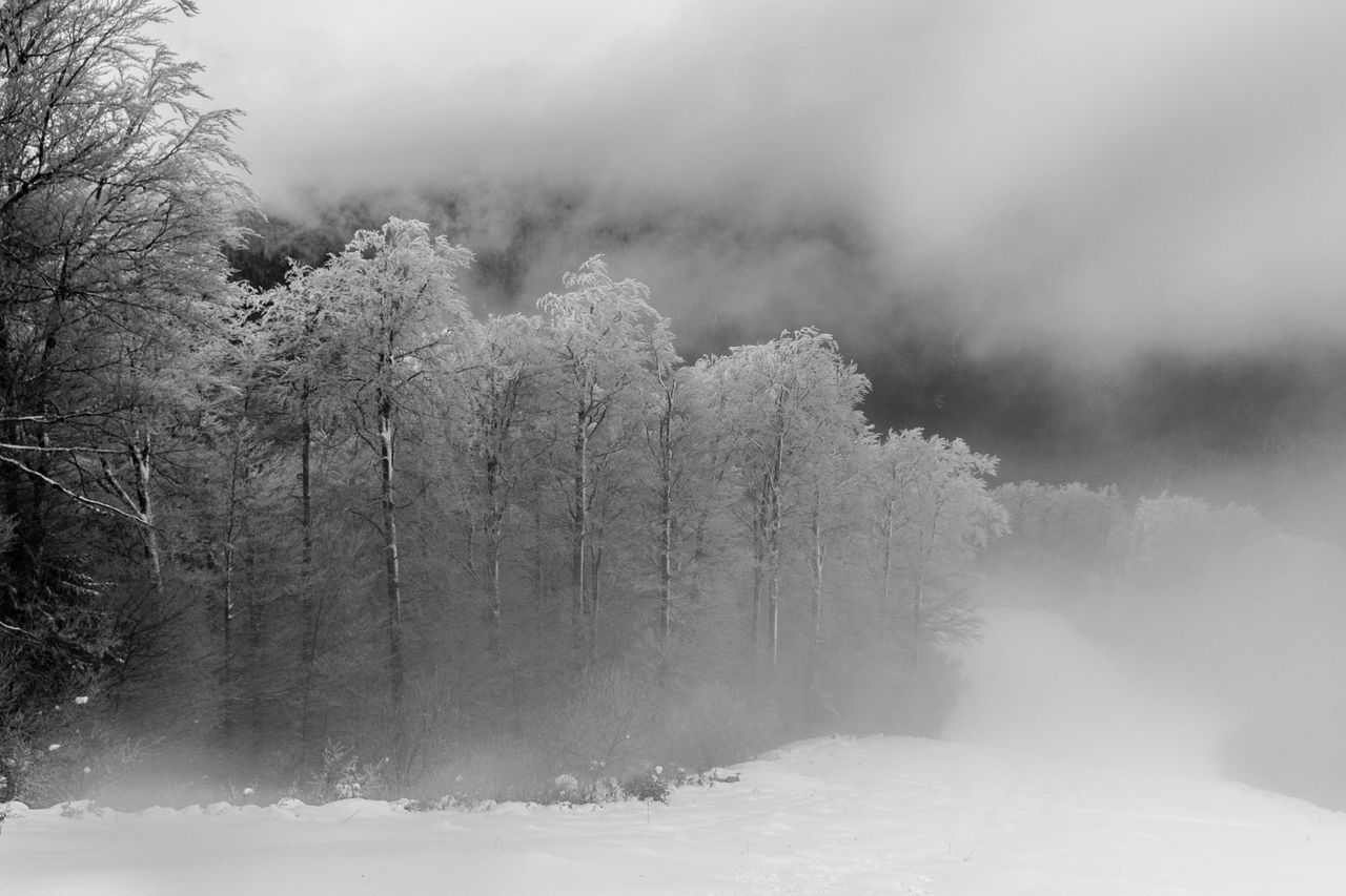 Wintry Breath Baiului Mountains, Baiuluimountains Black & White Photography Black And White Black And White Photography Blackandwhite Cold Cold Temperature Fine Art Fine Art Photography Fine-art Fine-art Photography Frozen Landscape Monochrome Mountains Muntii Baiului Nature Outdoors Season  Snow Snow Covered White Winter, Wintry Breath