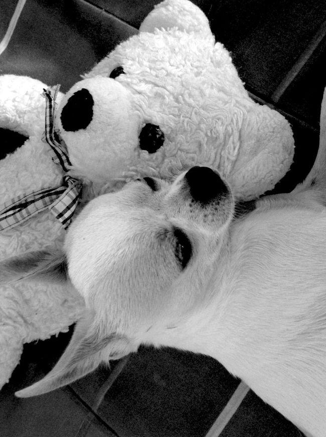 Dog & Bear