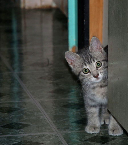 Scaredy-cat. Cat Cats Kitten Kittens Kitty Kittie Kitties Cats Of EyeEm Cat Lovers I ❤ Cat  Big Eyes Wide Eyed ScaredyCat Scaredycats Scared Afraid Trying To Hide Staring Staring At Me Looking At Camera Looking At Me