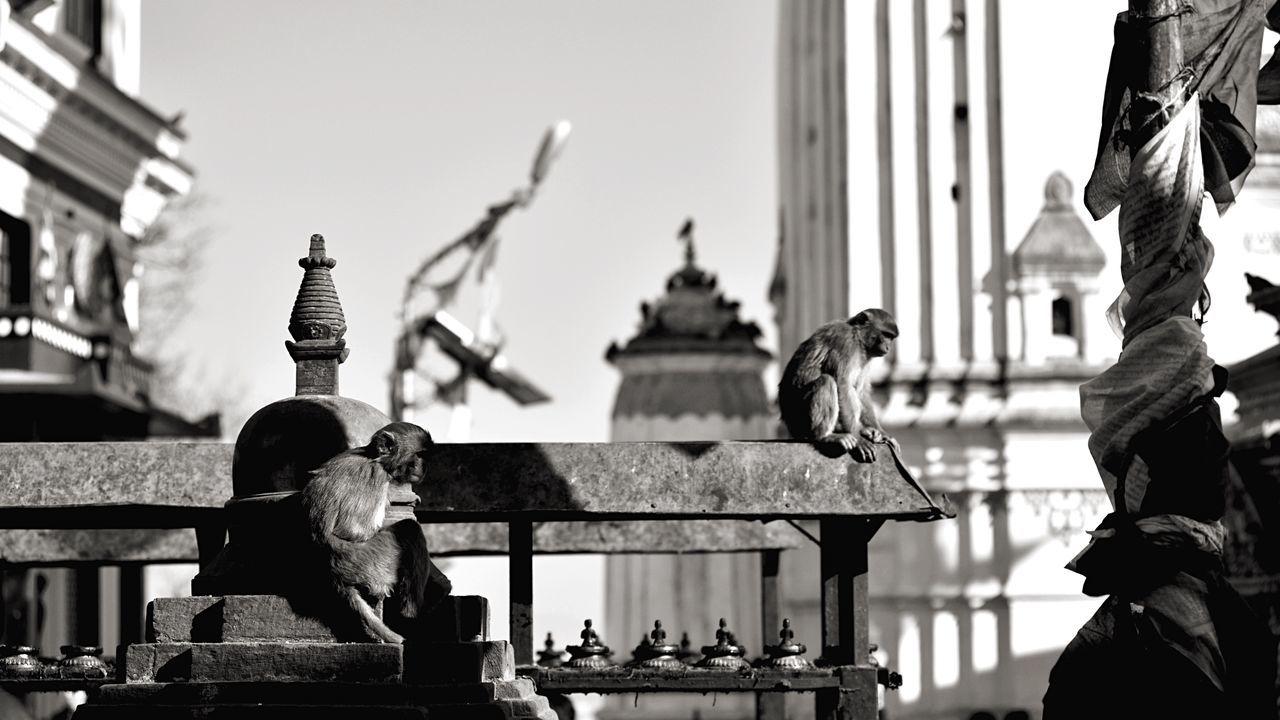 Beautiful stock photos of affe, Animal Themes, Animal Wildlife, Building Exterior, Built Structure
